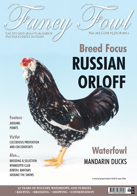 Fancy Fowl Poultry Magazine - June - Russian Orloff, Mandarin Ducks, Bobtail Bantams, Coccidiosis Prevention