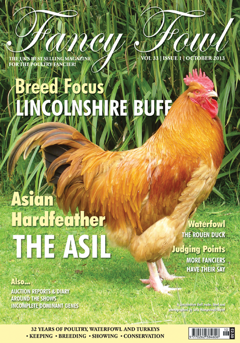 Fancy Fowl Poultry Magazine - October - Lincolnshire Buff, Asil, Rouen Duck, Asian Hardfeather, Dutch Belgium Bantam, Denbigh & Flint