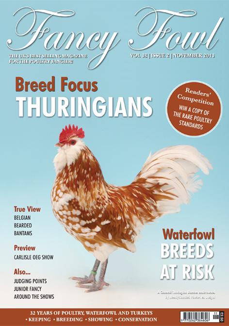 Fancy Fowl Poultry Waterfowl Chicken Turkey Magazine - November 2013 - Thuringians, Rare Poultry, Belgian Bearded Bantams, Waterfowl Breeds, Carlisle OEG, Old English Game, Scottish National, Poultry Show, Crick Village Egg Show, Isle of Wight, Scots Dumpy