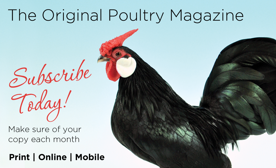 Buy-or-Subscribe-to-Fancy-Fowl-Poultry-Magazine