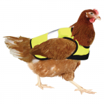 Omlet High-Vis Chicken Poultry Jacket