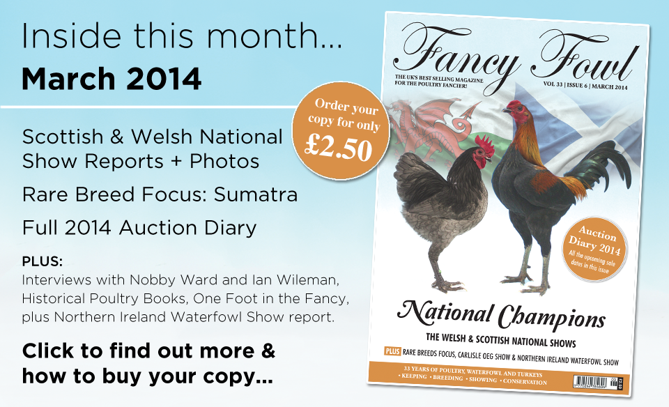 33-6-March-2014-Scottish-Poultry-Show-Welsh-National-Show-Rare-Breed-Sumatra-Auction-Diary-Nobby-Ward-German-Langshan-Northern-Ireland-Waterfowl-Northumberland-Carlisle-OEG-Old-English-Game