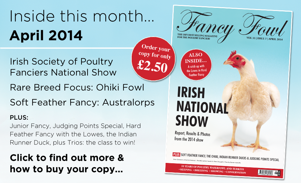 33-7-April-2014-Irish-National-Poultry-Show-Ohiki-Fowl-Australorps-Hard-Feather-Fancy-Indian-Runner-Duck-Trios