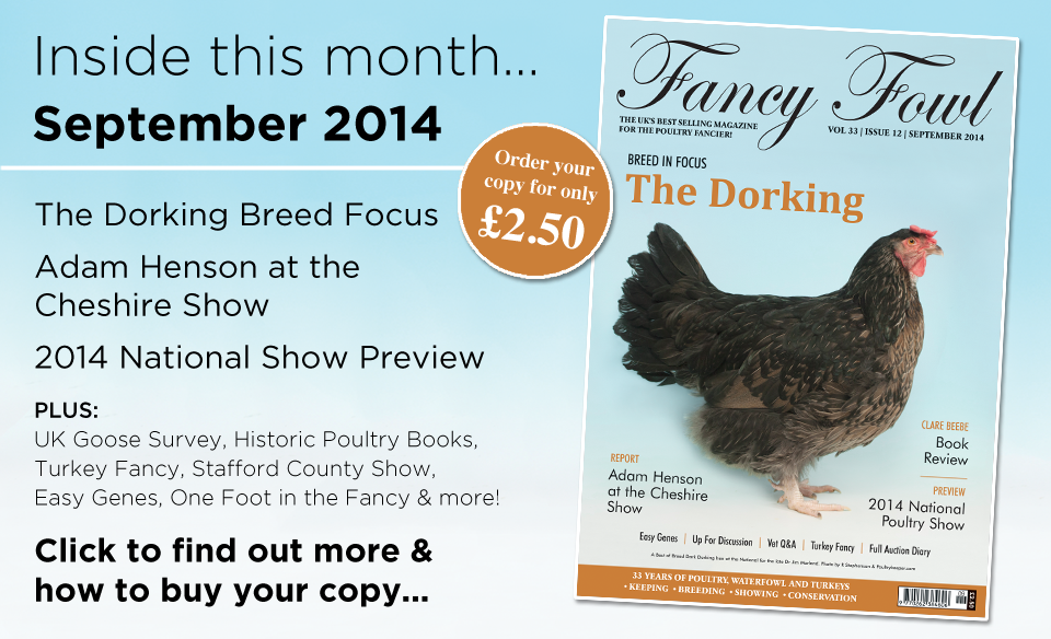 33-12-Sept-2014-Dorking-Fowl-National-Poultry-Show-2014-Preview-Breed-Focus-Easy-Genes-White-Genes-Goose-Survey-Poultry-Vet-Cheshire-Show-Bath-and-West-Stafford-County-Show