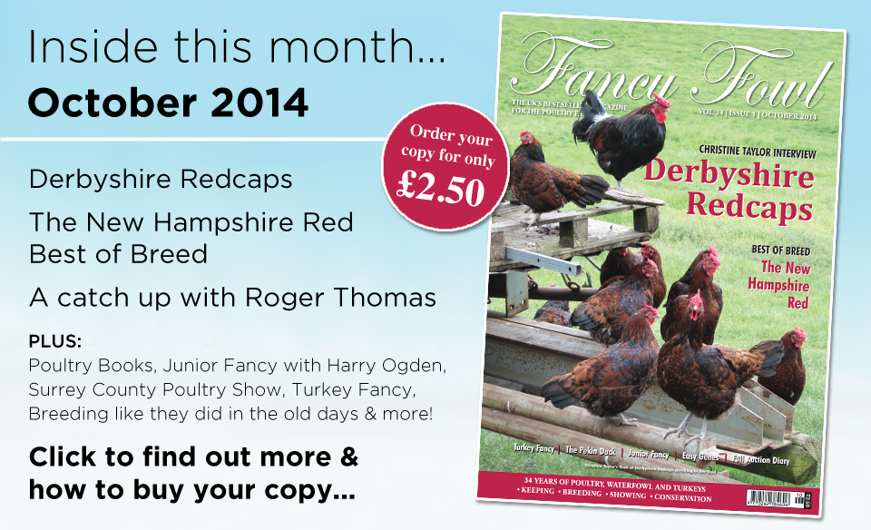 34-1-Oct-2014-Derbyshire-Redcaps-New-Hampshire-Red-Roger-Thomas-Harry-Ogden-Surrey-Poultry-Show-Leicester-Show-Breeding-Easy-Genes-Jungle-Fowl