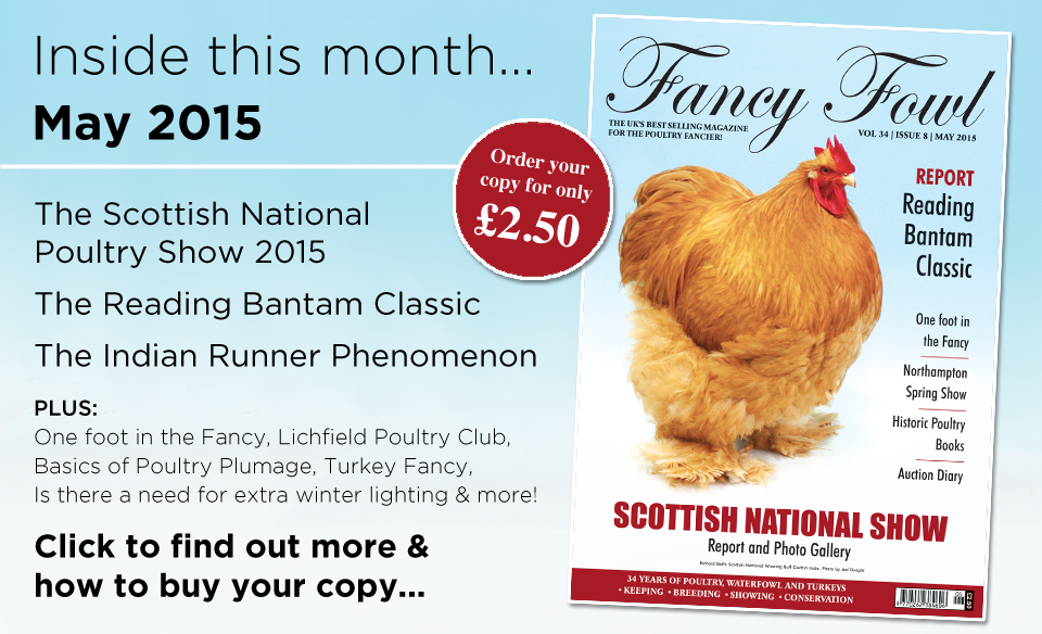 34-8-May-2015-Scottish-National-Poultry-Show-Reading-Bantam-Classic-Indian-Runner-Ducks-Lichfield-Poultry-Club-Poultry-Plumage