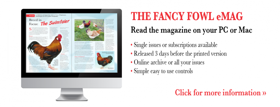 How to read Fancy Fowl Magazine on your computer