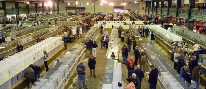 Federation Championship Poultry Show 2014 News