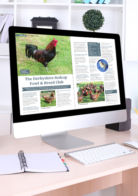 Fancy-Fowl-magazine-online